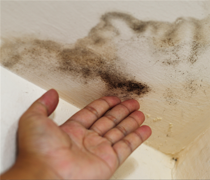 Commercial Beating Mold Growth With Quick Remediation